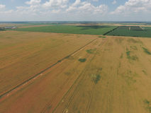 Field of ripe wheat. View from above. Stock Images