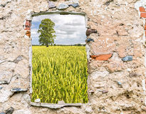Field of ripening cereal seen through the old window. Image may be useful  for ideas and concepts of the interactions of natural and industrials landscapes or Royalty Free Stock Photo