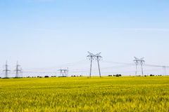 Field of ripening wheat with electricity pylons Stock Photos