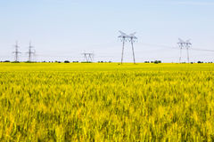 Field of ripening wheat with electricity pylons Royalty Free Stock Photography