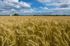 Field of ripening wheat, Europe Royalty Free Stock Image