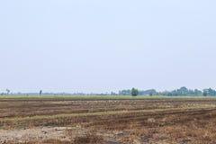 The Field ris Arkivfoton