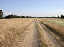 Field road. Rural landscape. Road in field. Blue sky Royalty Free Stock Photo