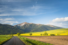 Field road Royalty Free Stock Images