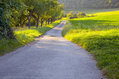 Field road. A field concrete road in the warm evening sun, to left apple orchard, by Beckingen,  Saarland / Germany Stock Images
