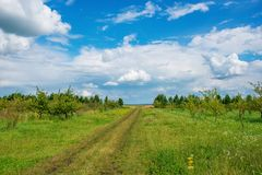 Field road on the background of the blue sky in the summer.  Stock Images