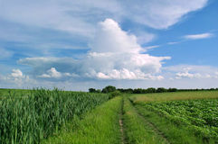 Field road on a beautiful day Royalty Free Stock Photos