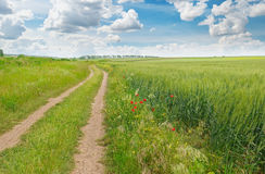 Field,  road and a blue sky Stock Photo