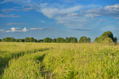Field with road and blue sky Royalty Free Stock Photography