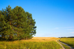 Field road. A road crossing a field Royalty Free Stock Image