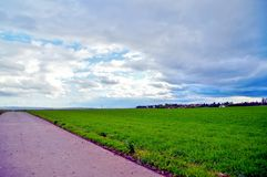 Landscape of green barley field beside a road and a the village named Spiesheim stock photo