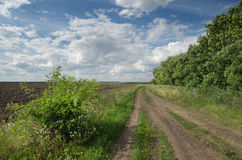Field road among the greenery Royalty Free Stock Photos