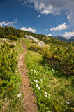Field Road In Mountains Stock Image