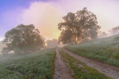 A field road lurking between trees shrouded in dense fog. Mysterious view royalty free stock photography