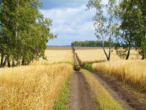 Field road. The field road passes on ripe fields of the farmer Royalty Free Stock Photos