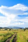 Field road in Serengeti. Tanzania, Africa Royalty Free Stock Photos