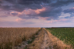 Field road in the sunset Royalty Free Stock Image