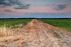Field road in the sunset Royalty Free Stock Photo