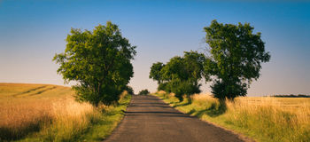Field road tree Stock Photography