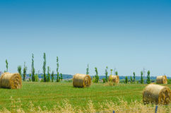 Field with rolls of hay Stock Photography
