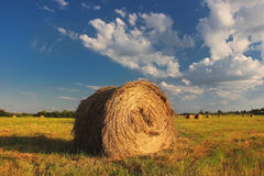 In the field. Rolls of hay in the field Stock Image