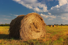 In the field. Rolls of hay in the field Royalty Free Stock Photography