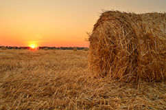 Field with rolls of straw. Summer sunset on the field with rolls of straw Stock Image