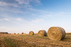 Field of Round bales of hay after harvesting Royalty Free Stock Image