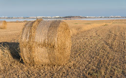 Field of Round bales of hay after harvesting Royalty Free Stock Images