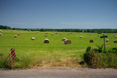 Field of Round Hay Bales Royalty Free Stock Images
