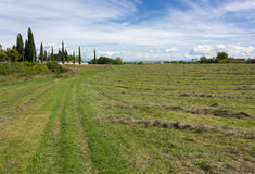 Field With Rows of Mowed Grass Stock Images