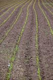 Field with Rows. This photo shows a field with rows Stock Photography