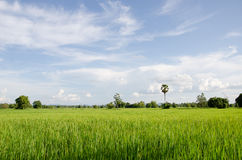Field in rural Royalty Free Stock Image