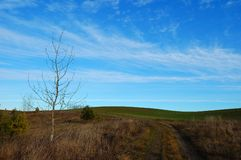 Field with the rural road, a naked tree and the blue sky Stock Photos