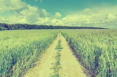 Field with rye and road. Stock Image