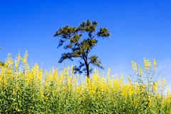 Field`s flowers, trees and blue sky. Stock Images