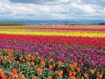 Field's Rainbow Stock Image