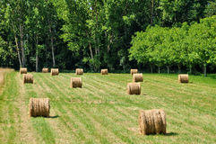 Field in Sainte Mondane in perigord Royalty Free Stock Images