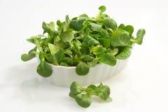 Field salad Royalty Free Stock Image