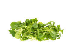 Field Salad Stock Photo