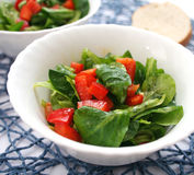 Field salad with paprika Royalty Free Stock Photos