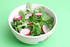 Field salad with radish. A field salad with radish Stock Photography