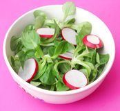Field salad with radish. A fresh field salad with radish Royalty Free Stock Images
