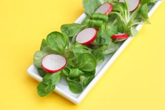 Field salad with radish. A fresh field salad with radish Stock Photography
