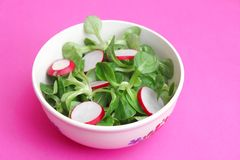 Field salad with radish. Some fresh field salad with red radish Royalty Free Stock Photos