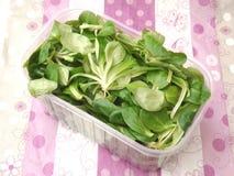 Field salad Royalty Free Stock Photos
