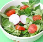 Field salad with tomatoes and radish Royalty Free Stock Image