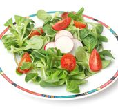Field salad with tomatoes. Some fresh field salad with tomatoes and radish Royalty Free Stock Photography