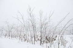 Field scenery covered  snow Stock Photo