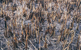 Field scorched by fire. The 'environmental disaster' Royalty Free Stock Photography
